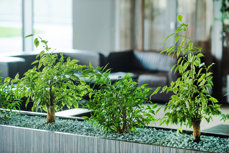 best-indoor-plants-for-air-purification2.jpg