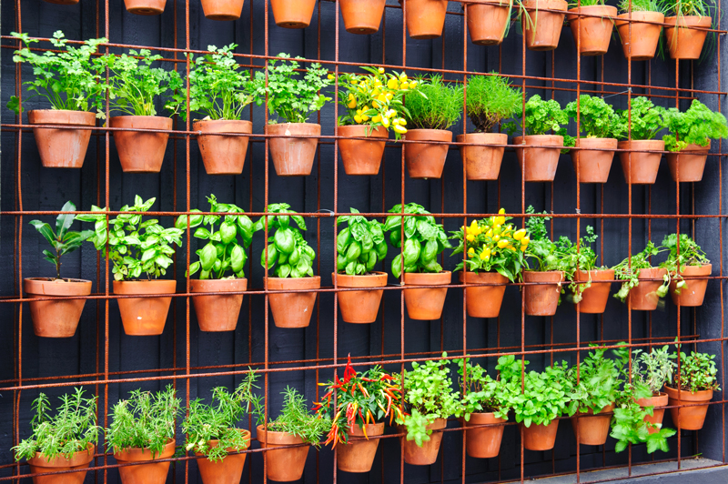 HOW TO Build A Herb Garden from Scratch
