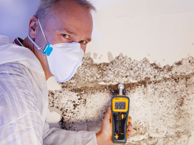 Damp in House Causes Illness: Here's How To Fix It...