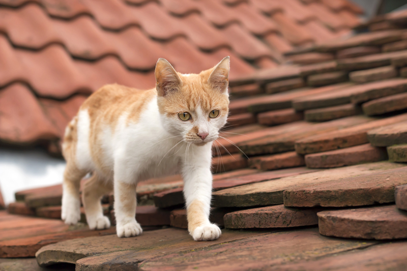 SOLVED: Can You Walk On A Tiled Roof?