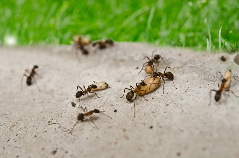 How To Avoid Ant Holes In Driveway