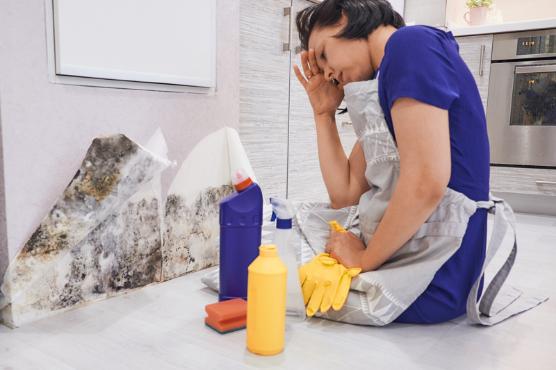how-to-clean-mould-off-walls3.jpg