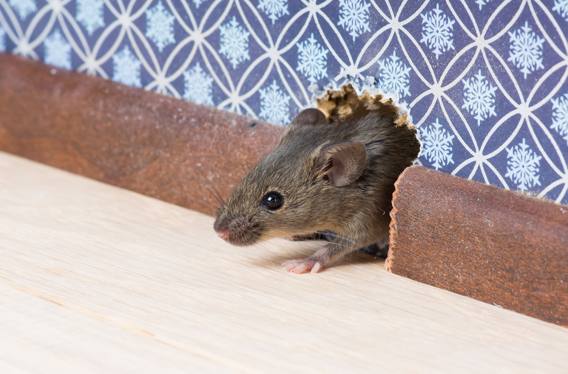 insulating your houses crawl space