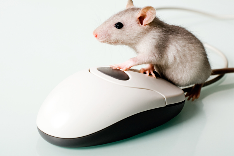 Mice in the Attic? Icynene Solutions