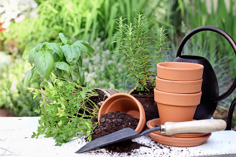 WHAT'S THE BIG DEAL WITH A Self Watering Herb Garden