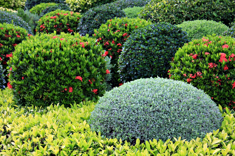 5 Super Small Evergreen Shrubs For Sunny Positions