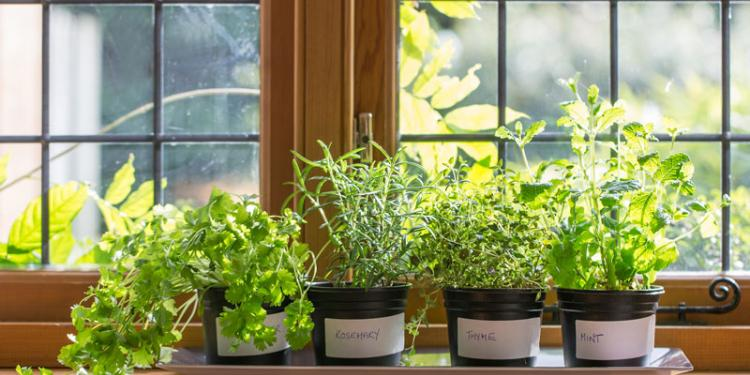 Best Herbs To Grow Indoors: The Definitive Guide
