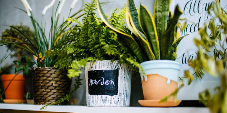 Best Indoor Plants For Air Purification: The Lowdown