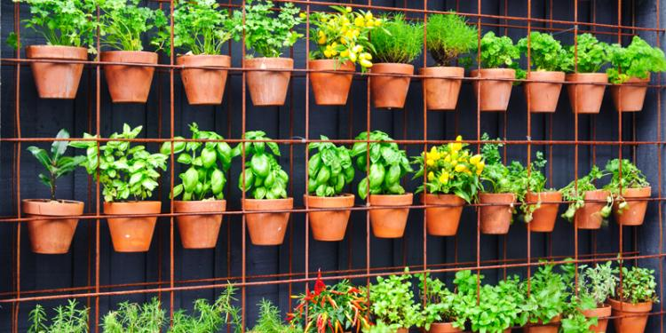HOW TO...Build A Herb Garden from Scratch