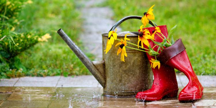 TAKE 3: Wet Weather Gardening Activities To Make A Difference