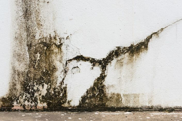 what does rising damp look like