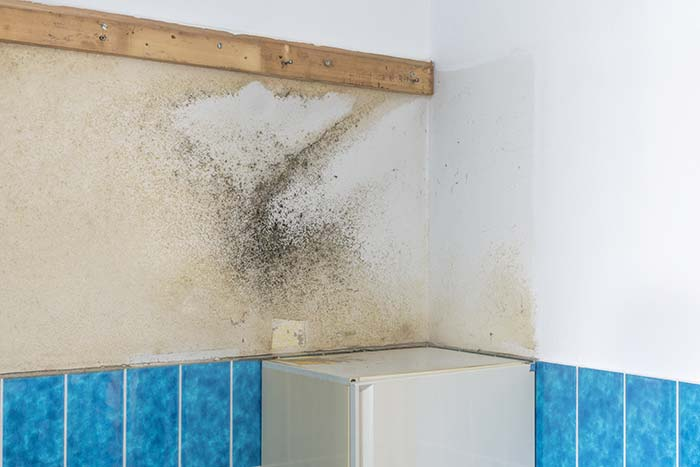 can damp and mould affect my health
