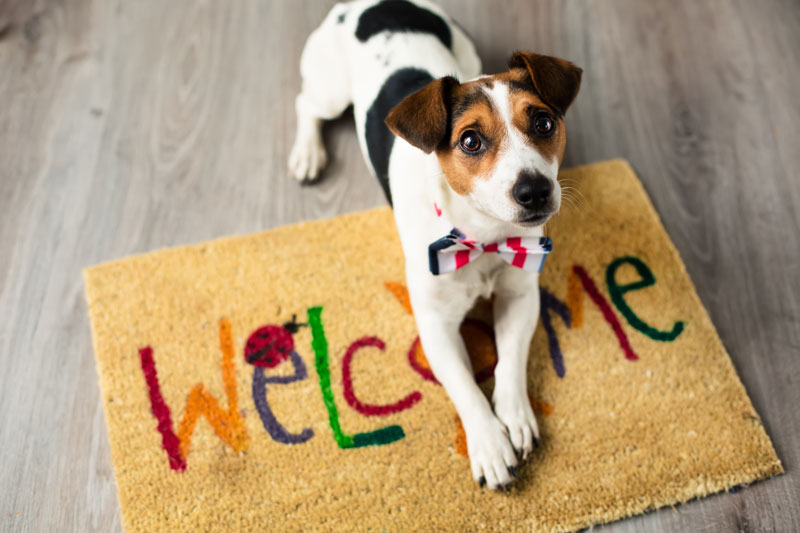 spray foam insulation and pets