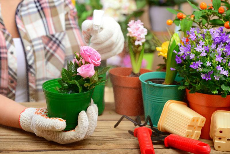 best household plants for low light