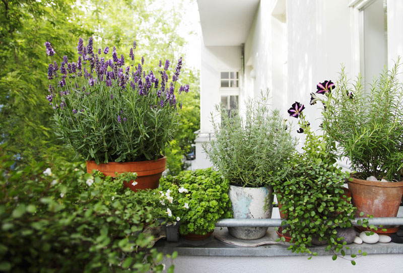 Best Plants For Apartments: The Essential Guide | Home ...