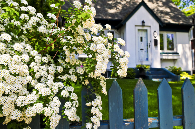 Cheap boundary fence ideas what are my options home logic cheap boundary fence ideas what are my options workwithnaturefo