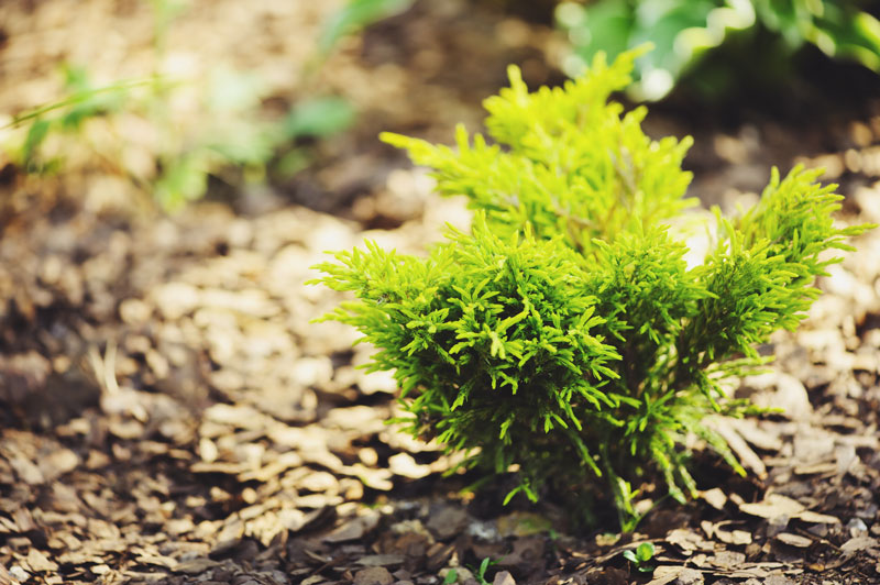 Small Shrubs To Plant In Front Of House This Spring
