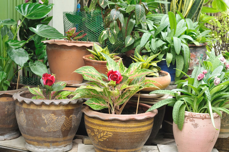 low maintenance potted plants