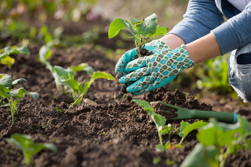 what to plant in a garden