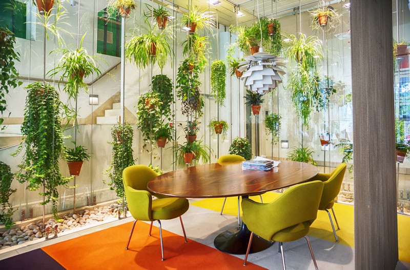 where-to-buy-office-plants