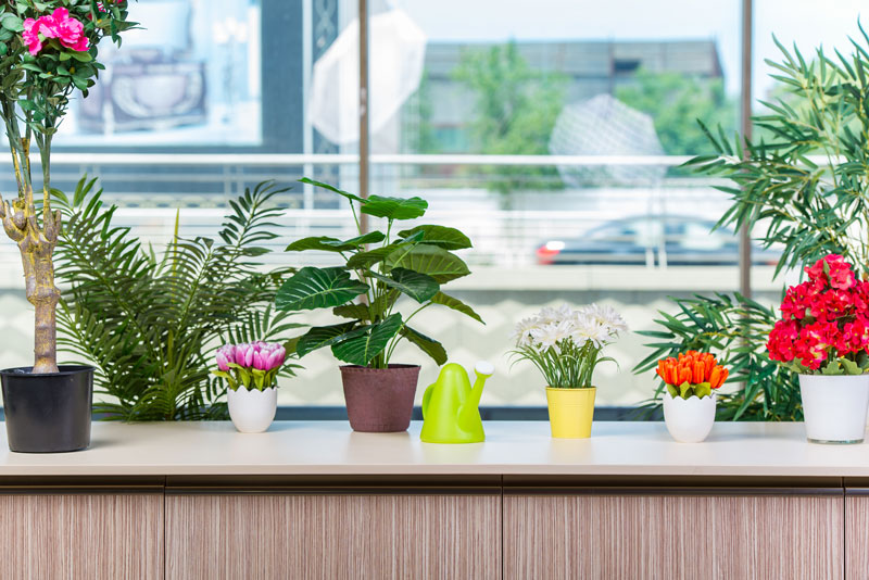 Where To Buy Office Plants The Definitive Guide Home Logic