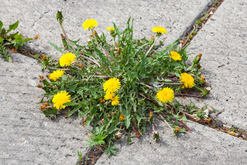 How To Permanently Get Rid Of Weeds In A Driveway